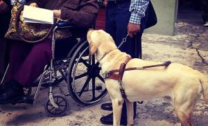 Group Voluntary Long Term Disability